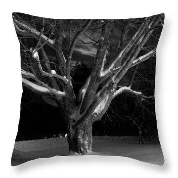 Throw Pillow featuring the photograph My Tree by Greg DeBeck