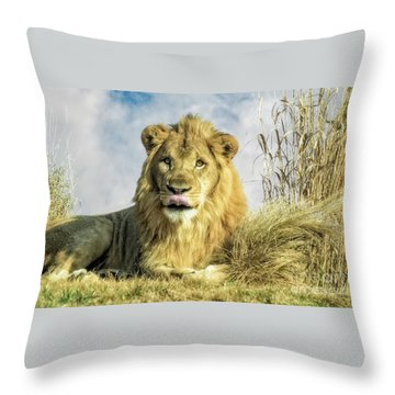 My You Look Tasty Throw Pillow