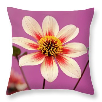 Mystic Dahlia Throw Pillow
