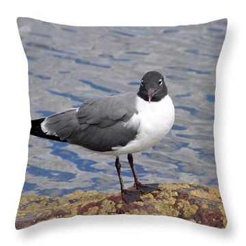 Throw Pillow featuring the photograph Bird by Glenn Gordon