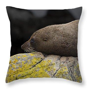 Nap Time Throw Pillow