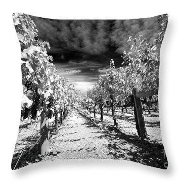 Napa Rows In Bw Throw Pillow by Mary Haber