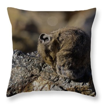 Napping American Pika - 4694 Throw Pillow