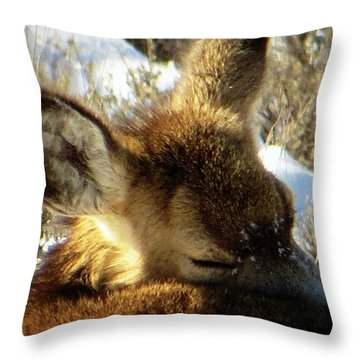 Napping Fawn Throw Pillow