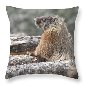 Napping Mountain Marmot Throw Pillow