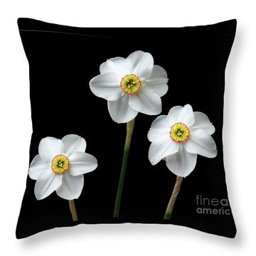 Narcissus 'poeticus' Throw Pillow