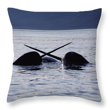 Narwhal Males Sparring Baffin Island Throw Pillow