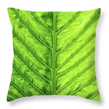 Throw Pillow featuring the photograph Cunjevoi Lily Leaf by Tim Gainey