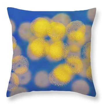 Throw Pillow featuring the photograph Natural Lights by Ari Salmela
