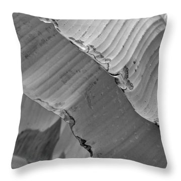 Natural Shingles Throw Pillow by Tim Good