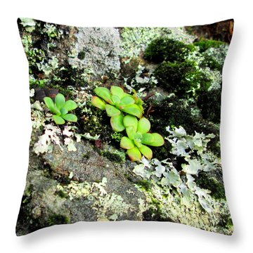 Natural Still Life #3 Throw Pillow