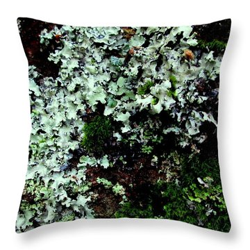 Natural Still Life #6 Throw Pillow