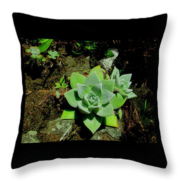 Natural Still Life #9 Throw Pillow