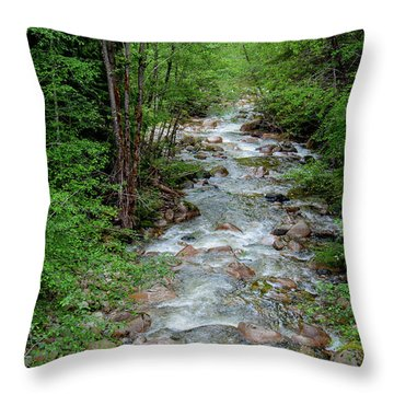 Naturally Pure Stream Backroad Discovery Throw Pillow