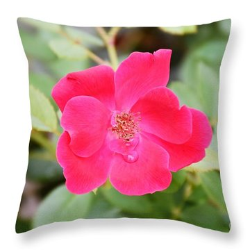 Throw Pillow featuring the photograph Nature - Colorful Flower Gifts  by Ray Shrewsberry