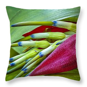 Nature In Bloom Throw Pillow by Carolyn Marshall