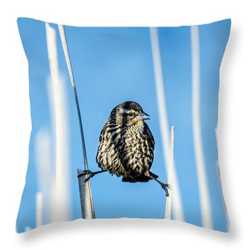 Nature's Circus Throw Pillow