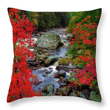 Natures Frame Throw Pillow by Mark Papke