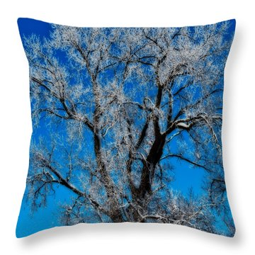 Natures Lace Throw Pillow