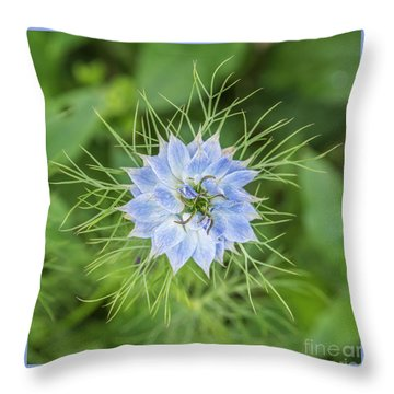 Throw Pillow featuring the photograph Natures Star by Wendy Wilton
