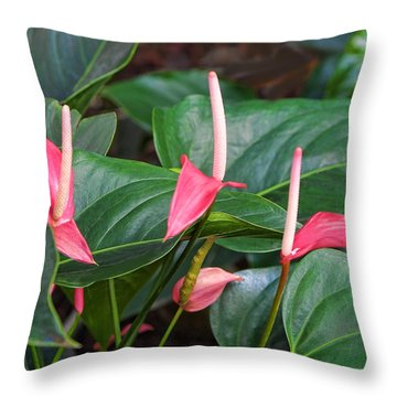 Naural Asapanthus Flowers Throw Pillow by Linda Phelps