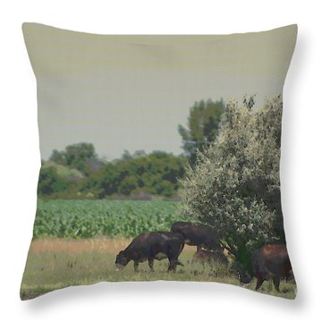 Nebraska Farm Life - Black Cows Grazing Throw Pillow