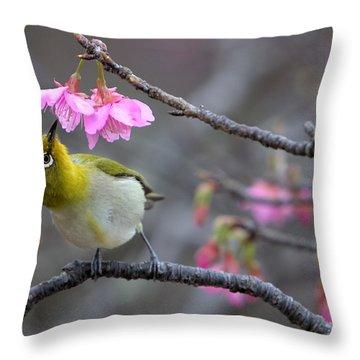 Warbler Throw Pillows