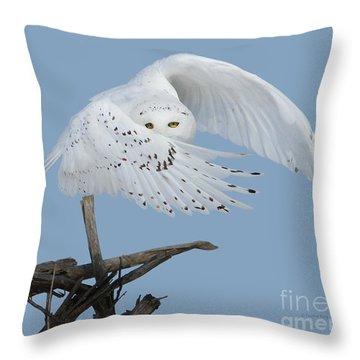 Peek - A - Boo Throw Pillow