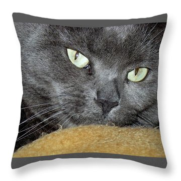 My Nellie-belle's Catitude Throw Pillow