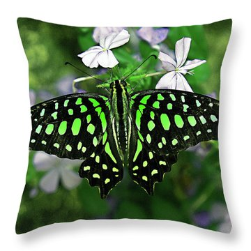 Neon --- Tailed Jay Butterfly Throw Pillow