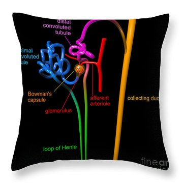 Throw Pillow featuring the digital art Nephron Black With Coloured Labels by Russell Kightley