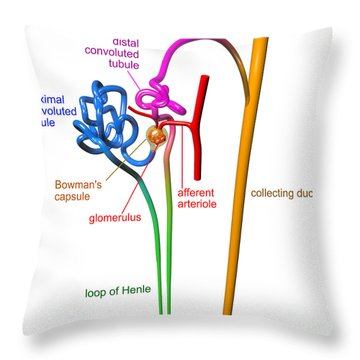 Throw Pillow featuring the digital art Nephron White With Labels by Russell Kightley