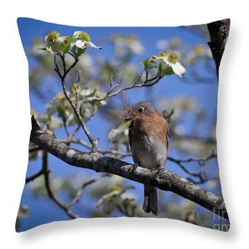 Nest Building Throw Pillow by Douglas Stucky