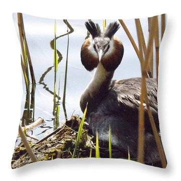 Nesting Grebe Throw Pillow