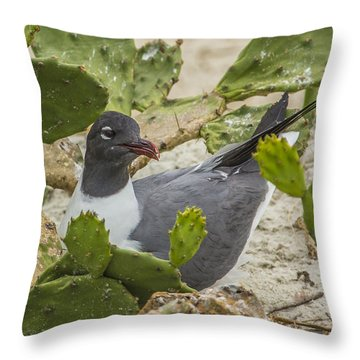 Throw Pillow featuring the photograph Nesting Laughing Gull by Paula Porterfield-Izzo