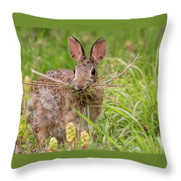 Nesting Rabbit Throw Pillow by Terry DeLuco