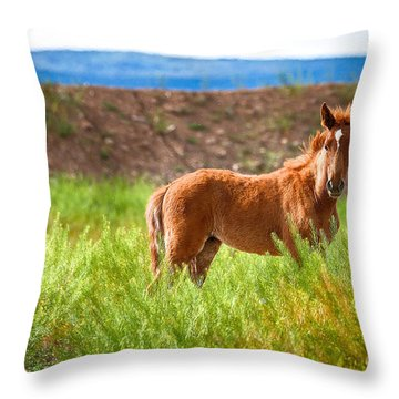 Nevada Mustang Baby - Spring 2016 Throw Pillow by Vinnie Oakes