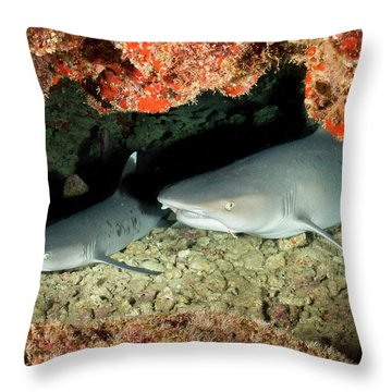 New Baby On The Way.... Throw Pillow