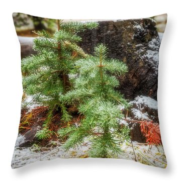 Throw Pillow featuring the photograph New Beginnings by Cat Connor