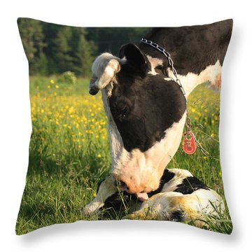 New Born Calf Throw Pillow