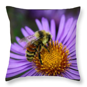 Throw Pillow featuring the photograph New England Aster And Bee by Steve Augustin