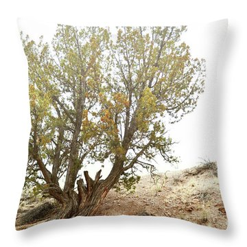 Throw Pillow featuring the photograph New Mexico Desert Southwest Tree by Andrea Hazel Ihlefeld