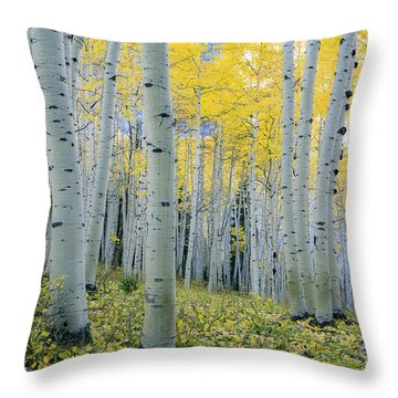 Throw Pillow featuring the photograph New Morning by The Forests Edge Photography - Diane Sandoval