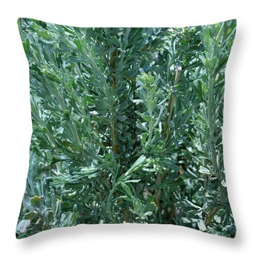New Sage Throw Pillow