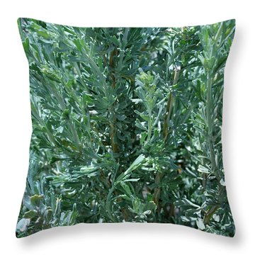 New Sage Throw Pillow