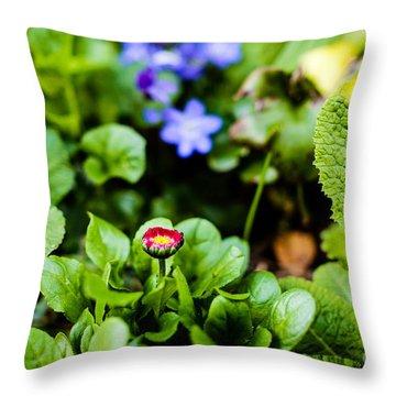 New Season For Bellis Perennis Bellissima Red Throw Pillow