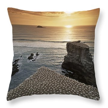 Throw Pillow featuring the photograph new zealand gannet colony at muriwai beach ,gannet fly from Muri by Juergen Held