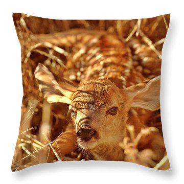Newborn Fawn Throw Pillow by Mark Duffy