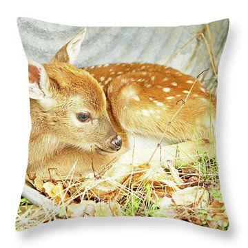 Newborn Fawn Takes Shelter In An Old Washtub Throw Pillow