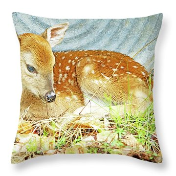Newborn Fawn Takes Shelter In An Old Washtub II Throw Pillow